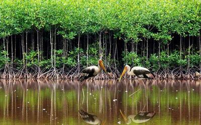 Vườn quốc gia Côn Đảo
