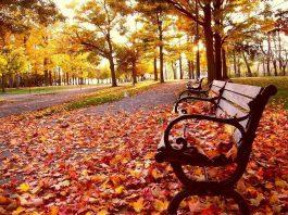 Hàn Quốc mùa thu